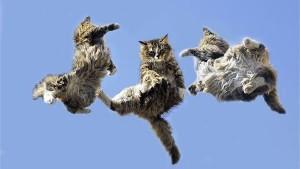 Mitovi - Mačke i njihovih 9 života